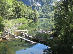 rio-troncos
