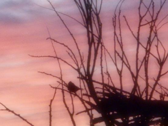 el pajarito enamrado del cielo (2)