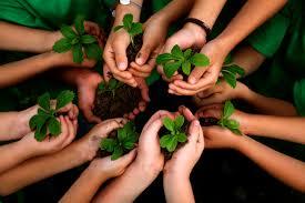 manos-y-plantas